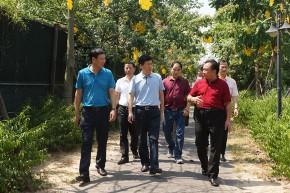 英德市政协副主席陈茂奕带队到我区参观交流